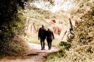 Het nut van een (lange) wandeling